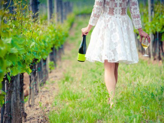 Holdvölgy borászat,Hold and Hollo,borok,borászat,