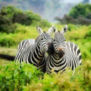 ,nászút,kenya,afrika,utazás,úti cél,2018,úti terv,nyaralás,szafari,