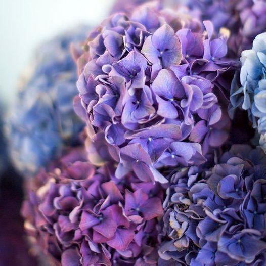 ,Ultra Violet,év színe,pantone,ultraviola,ultraibolya,ultralila,lila,esküvői dekoráció,esküvői színek,év színe 2018,