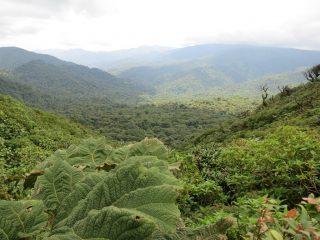 Ha nászút, akkor irány a gazdag part, ami a Happy Planet Index szerint egyben a Föld legboldogabb országa. Irány Costa Rica!