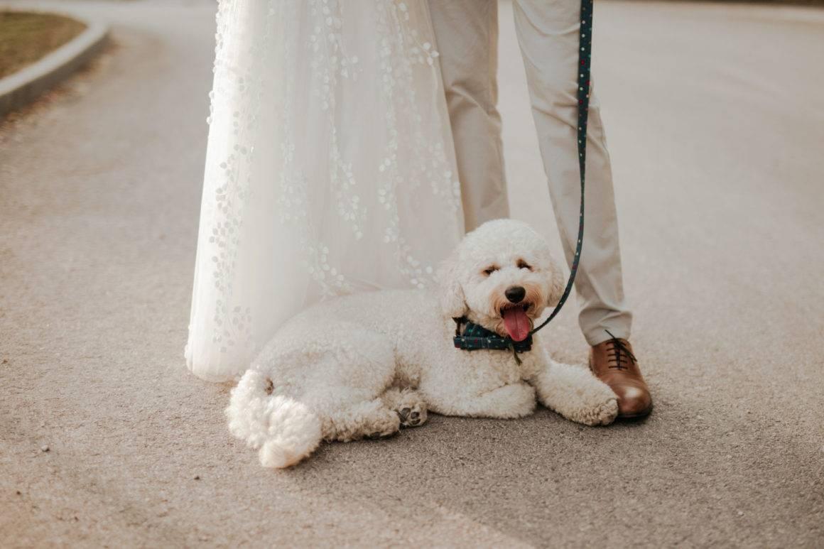 kutya menyasszonyok flört könyv olasz