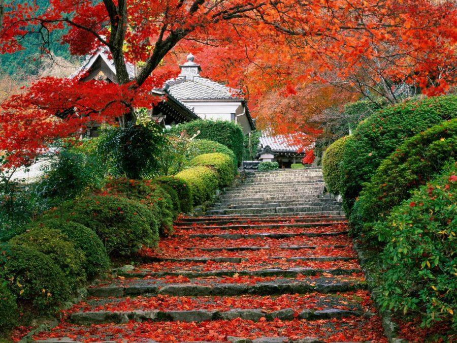 ,nászút,japán japán nászút,nászutas úticél,utazás,japán utazás,tokió nászút,nászút a világ körül,legjobb nászutak,őszi nászút,